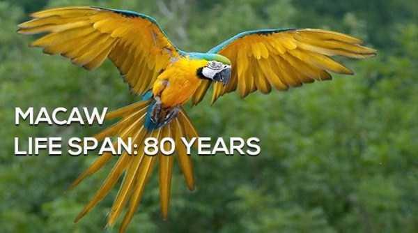 animals-lifespan (4)