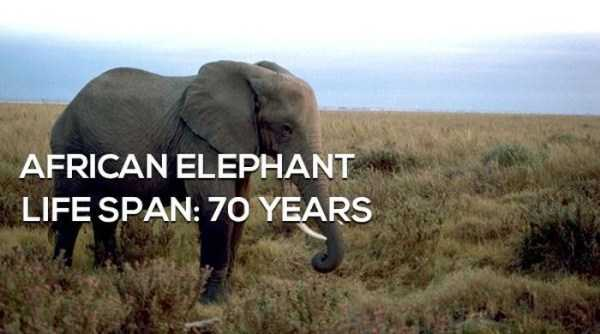 animals-lifespan (5)