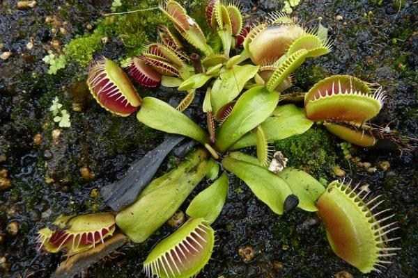 bizarre-plants (21)