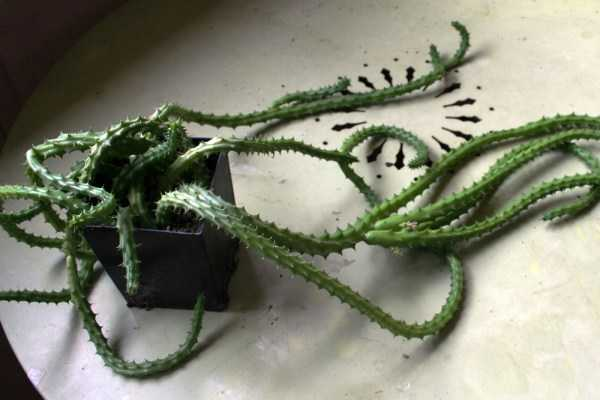 bizarre-plants (23)