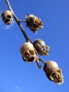 bizarre-plants (4)