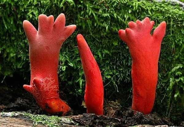 bizarre-plants (7)