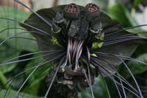 bizarre-plants (9)