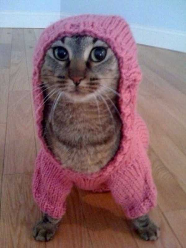 cute-cats-in-hoodies (11)