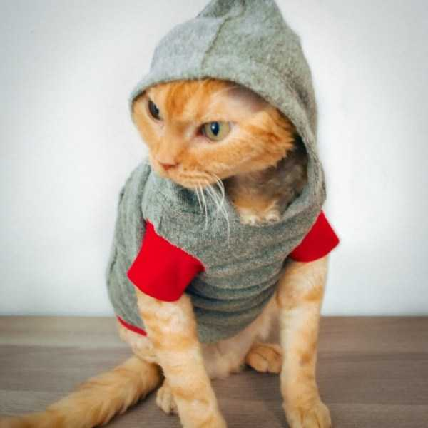 cute-cats-in-hoodies (13)