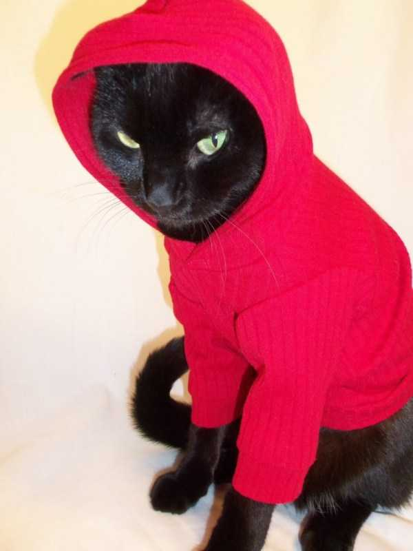 cute-cats-in-hoodies (14)