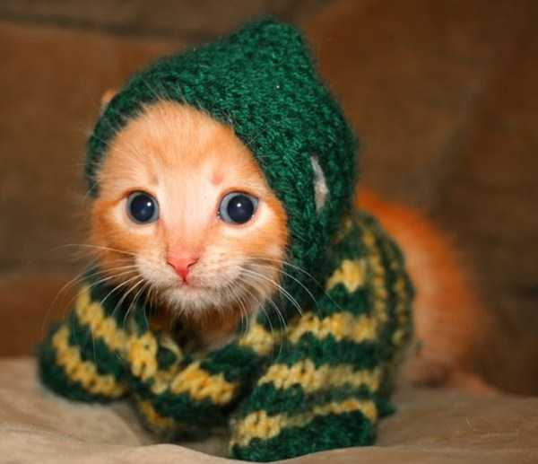 cute-cats-in-hoodies (16)