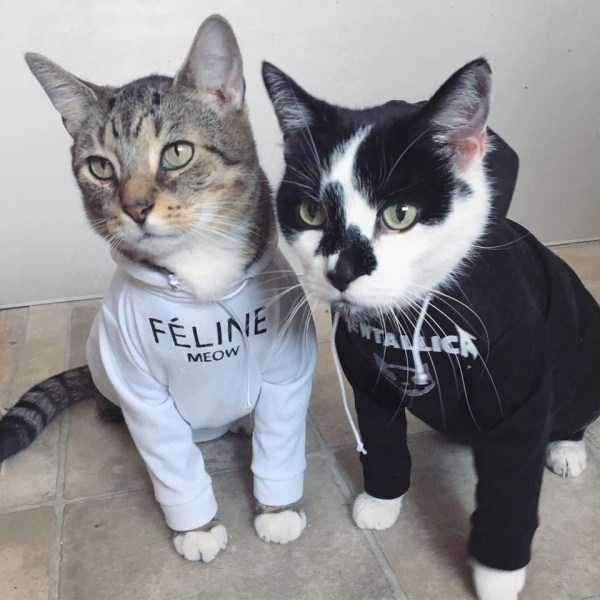 cute-cats-in-hoodies (18)