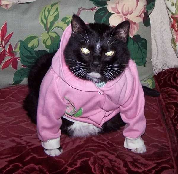 cute-cats-in-hoodies (19)