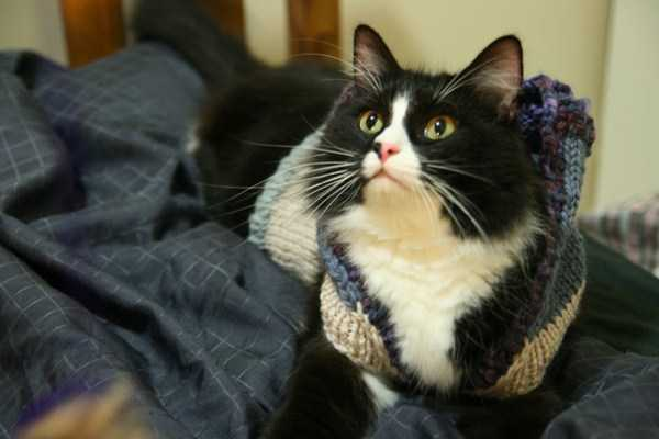 cute-cats-in-hoodies (20)