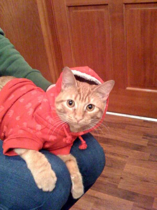 cute-cats-in-hoodies (23)