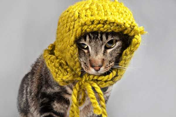 cute-cats-in-hoodies (24)