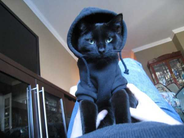 cute-cats-in-hoodies (25)