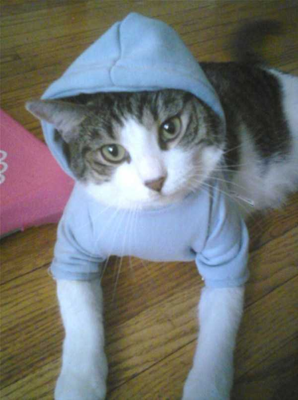 cute-cats-in-hoodies (26)