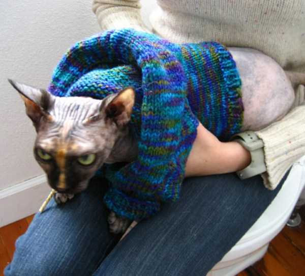 cute-cats-in-hoodies (27)