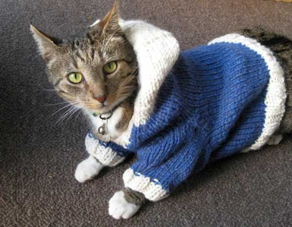 cute-cats-in-hoodies (28)