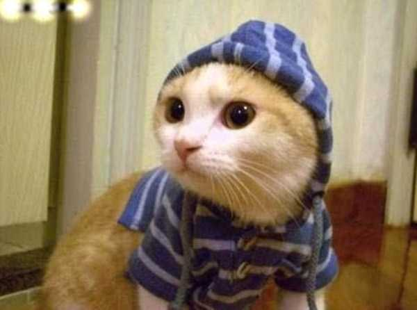 cute-cats-in-hoodies (29)