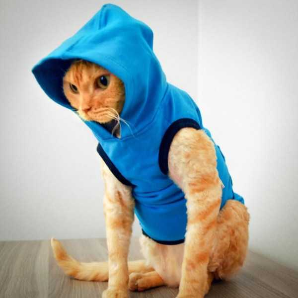 cute-cats-in-hoodies (3)