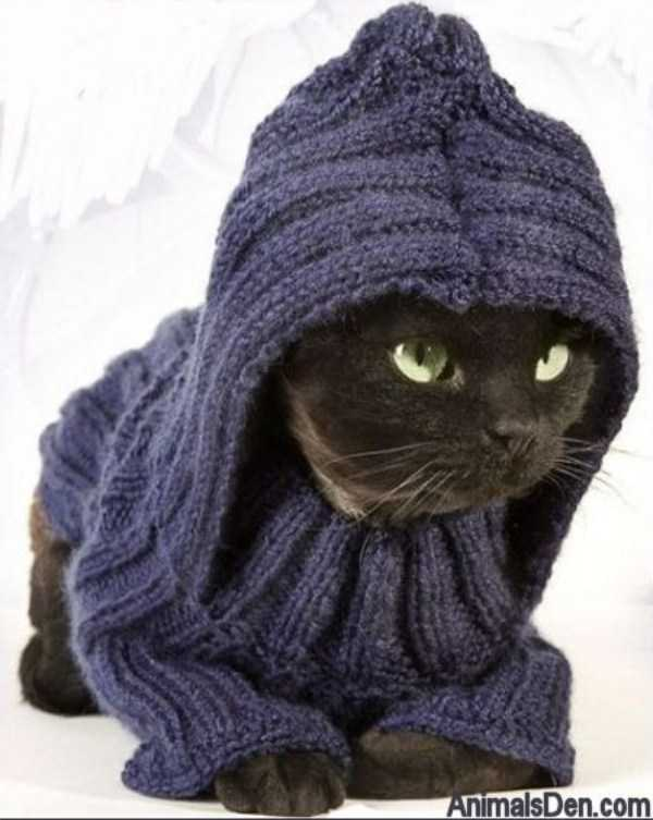 cute-cats-in-hoodies (30)