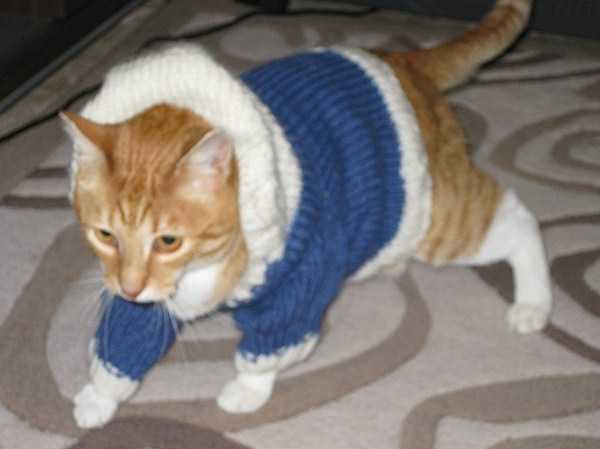 cute-cats-in-hoodies (31)