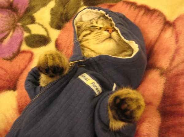 cute-cats-in-hoodies (33)
