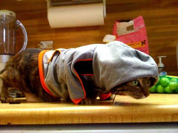 cute-cats-in-hoodies (34)