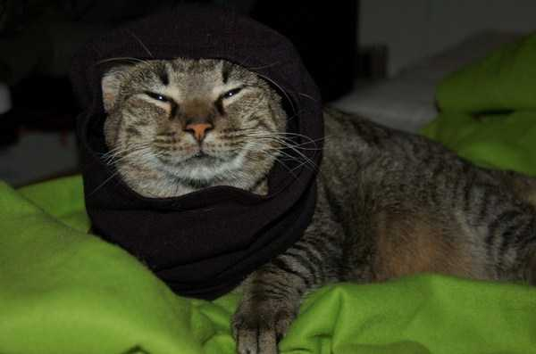 cute-cats-in-hoodies (35)