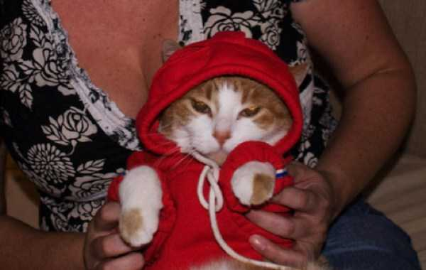 cute-cats-in-hoodies (36)
