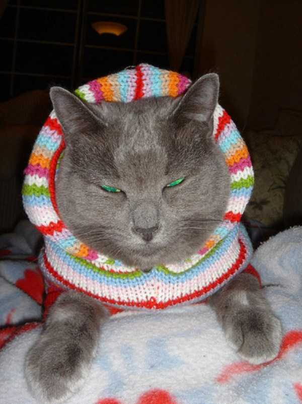 cute-cats-in-hoodies (37)