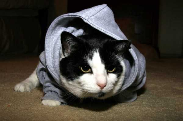 cute-cats-in-hoodies (38)