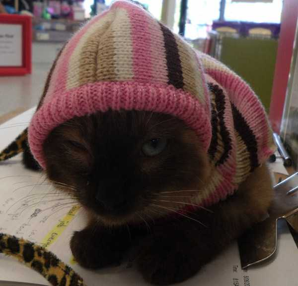 cute-cats-in-hoodies (39)