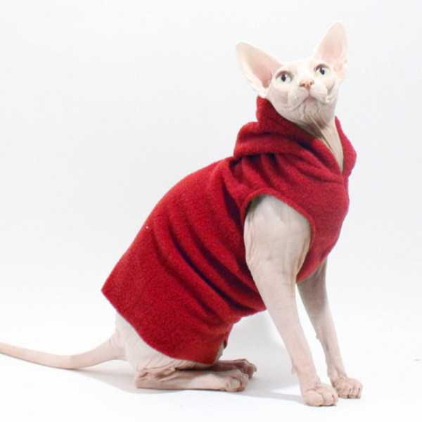 cute-cats-in-hoodies (4)