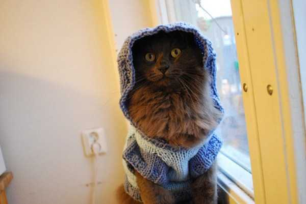 cute-cats-in-hoodies (40)