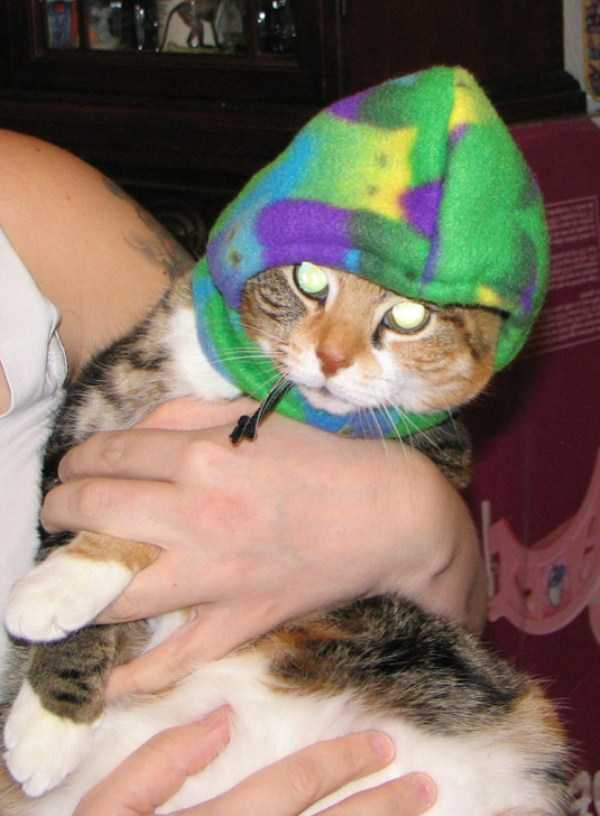 cute-cats-in-hoodies (41)
