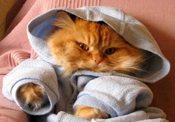 cute-cats-in-hoodies (43)