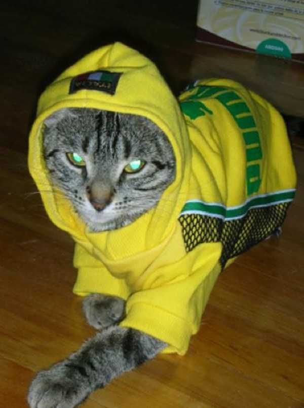 cute-cats-in-hoodies (44)