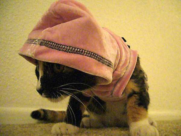 cute-cats-in-hoodies (45)