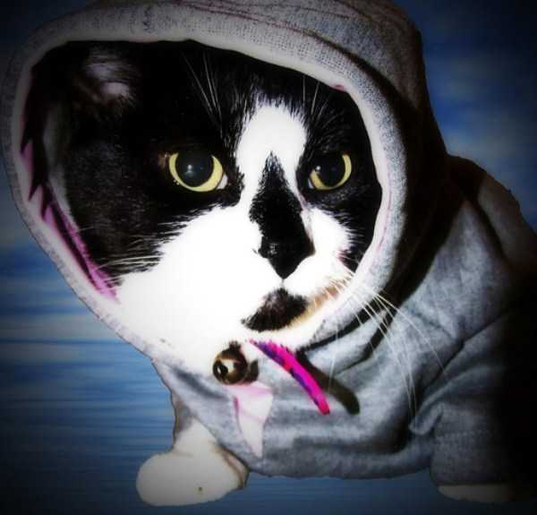 cute-cats-in-hoodies (46)
