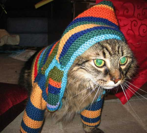 cute-cats-in-hoodies (47)