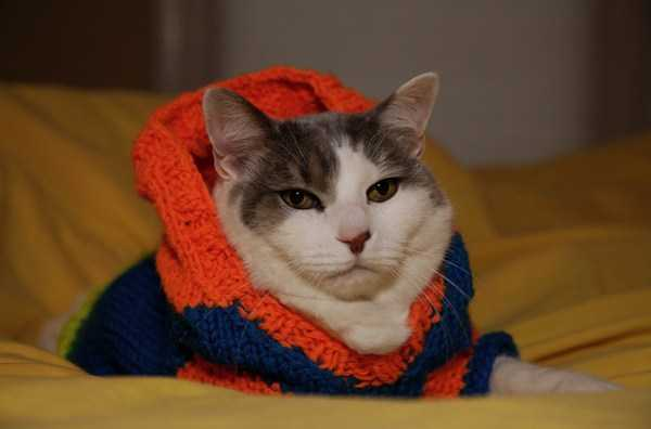 cute-cats-in-hoodies (48)