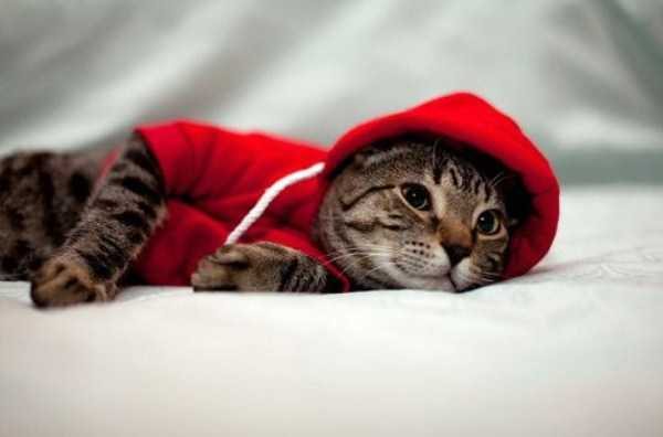 cute-cats-in-hoodies (49)