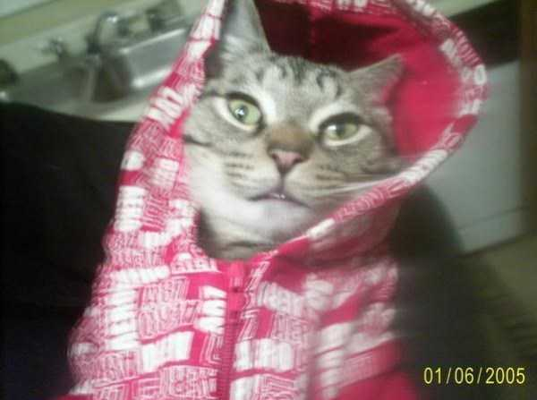 cute-cats-in-hoodies (50)