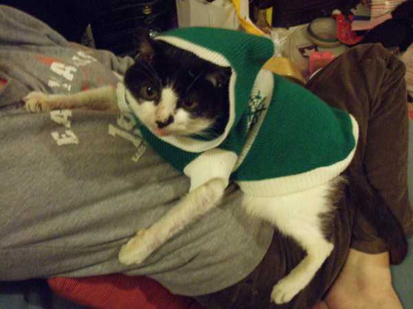 cute-cats-in-hoodies (51)