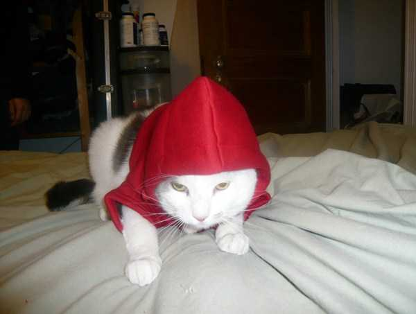 cute-cats-in-hoodies (54)