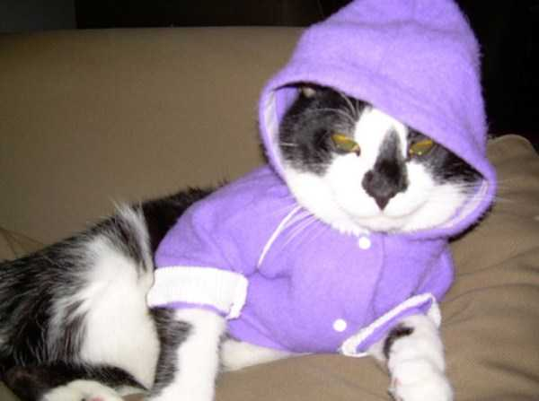 cute-cats-in-hoodies (55)