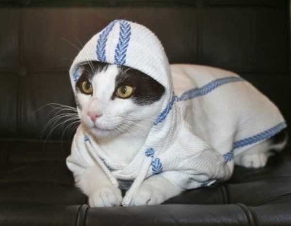 cute-cats-in-hoodies (57)