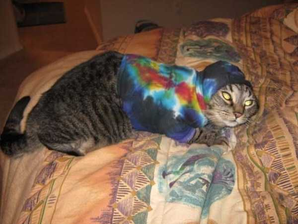 cute-cats-in-hoodies (59)