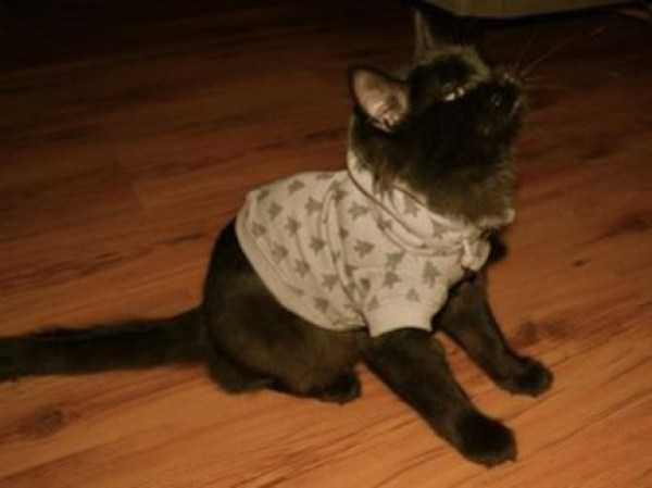cute-cats-in-hoodies (60)
