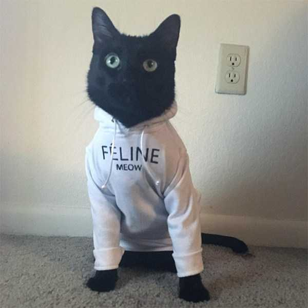 cute-cats-in-hoodies (7)