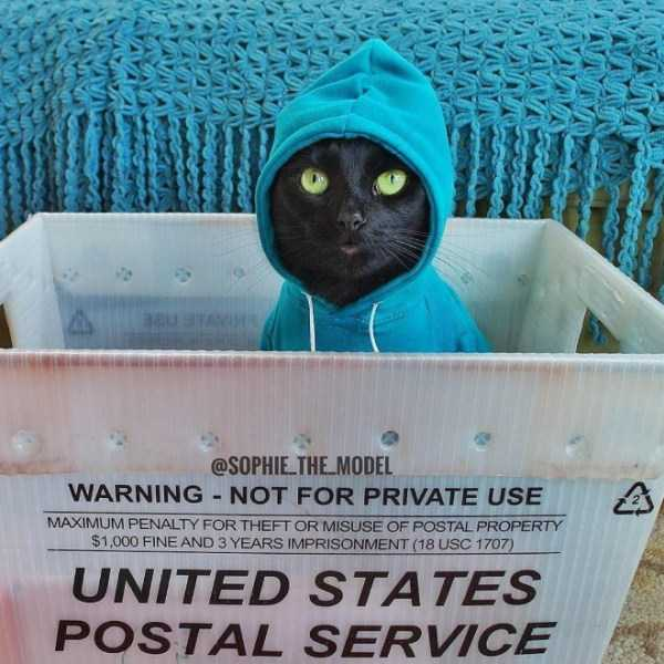 cute-cats-in-hoodies (8)